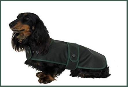 Abbigliamento per bassotti cane