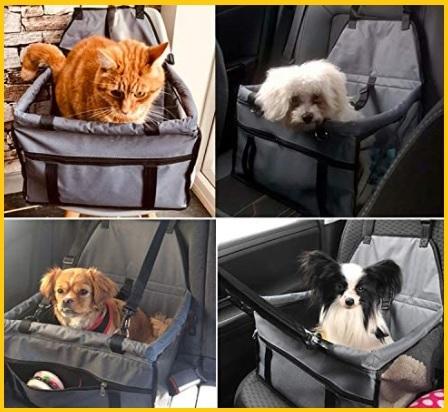 Accessori viaggio per cani