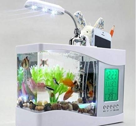 Acquario per pesci piccolo