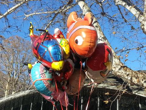 Service party palloncini per feste di compleanno