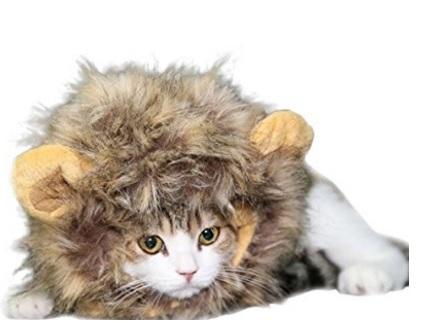 Parrucca Per Gatti Da Leone