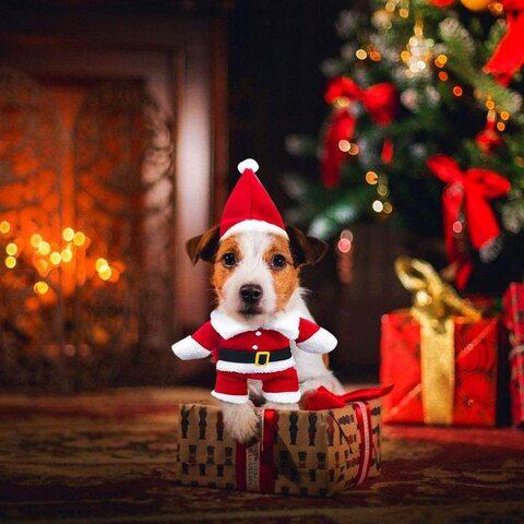 Costumino natalizio per animali