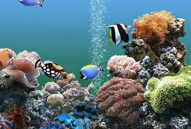 Acquario per pesci tropicali acqua dolce e acqua salata for Arredo acquario acqua dolce