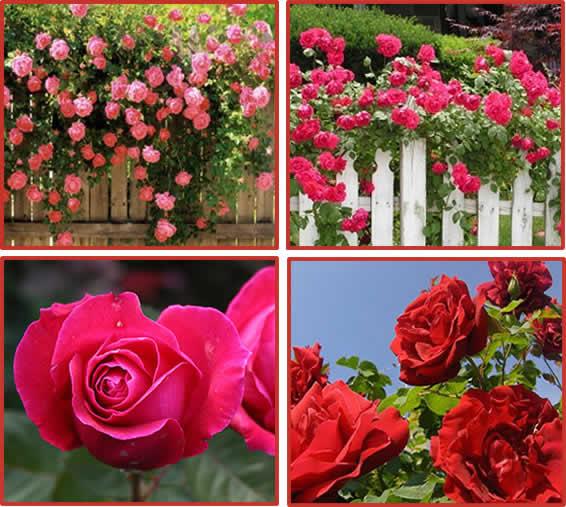 Piante finte da appartamento for Potatura delle rose