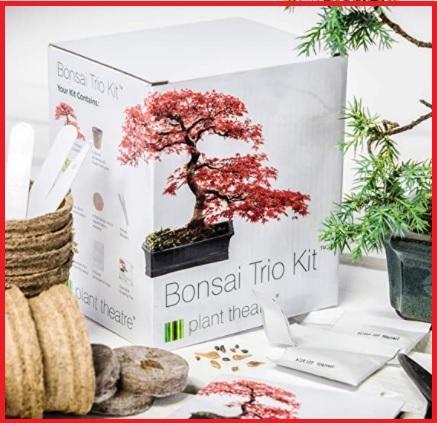 Bonsai pianta vera da coltivare