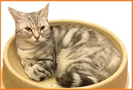 Cuccia Per Gatti Cartone