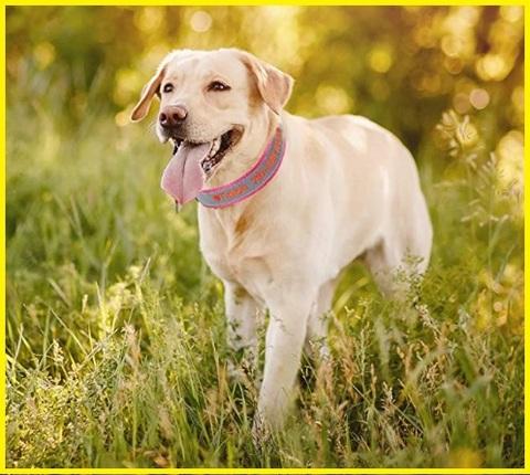 Collare per cane personalizzato