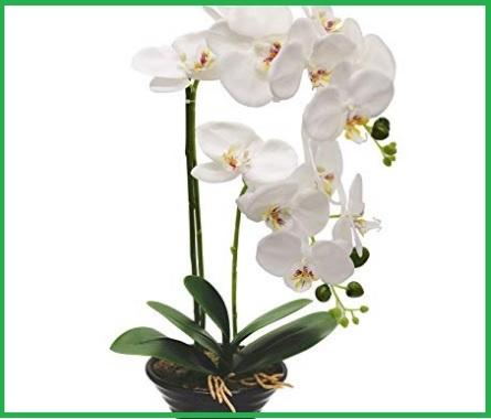 Composizioni floreali in vaso