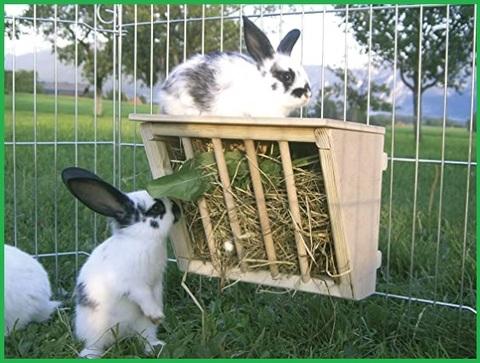 Conigli accessori legno