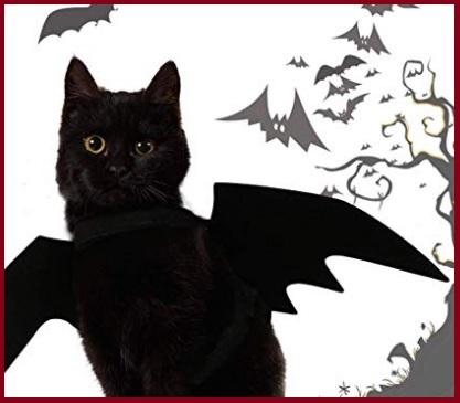 Animali vestiti per halloween pipistrello
