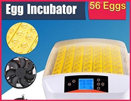 Incubatrice Per Uova Automatica Professionale