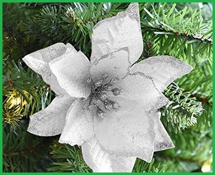 Fiori Per Natale Bianchi
