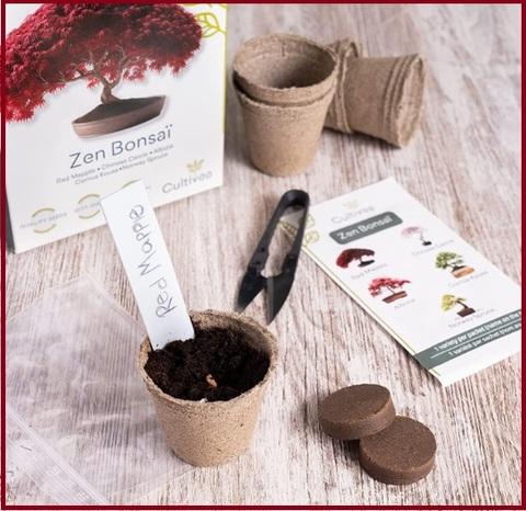 Idee regalo piante etniche