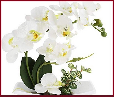 Vasi e orchidee bianche