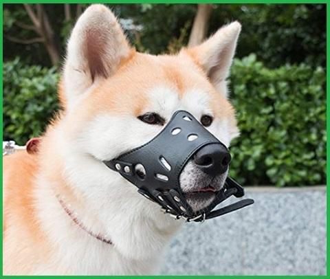 Museruola per cane taglia media