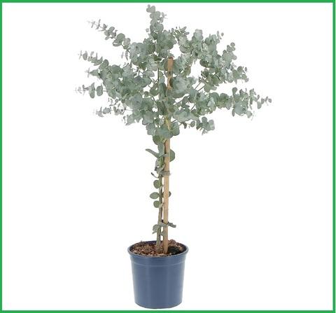 Pianta da giardino sempreverde stunning le piante da for Vendita piante da giardino