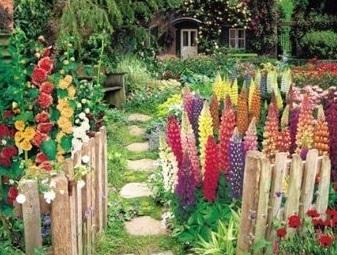 Piante per giardino cottage