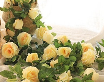 Rose Rampicanti Per La Casa
