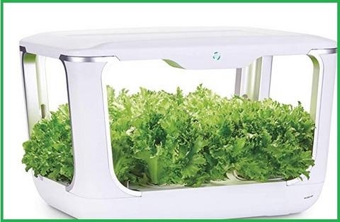 Serra elettrica per piante