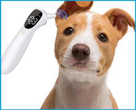 Termometro per cani domestici