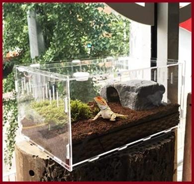 Terrario in plexiglass
