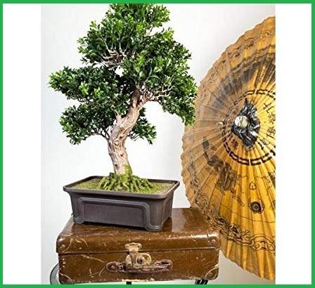 Vaso orientale bonsai