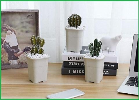 Vasi in plastica per piante grasse